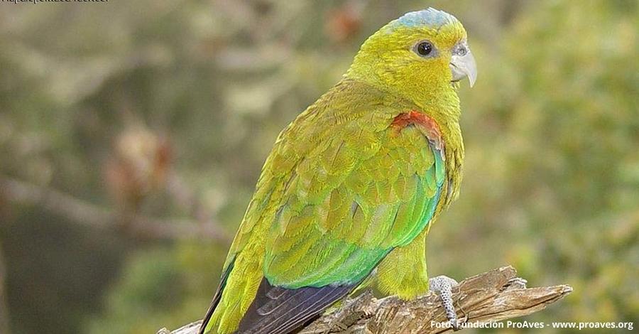 Els ocells de Colòmbia seran protagonistes al Delta Birding Festival