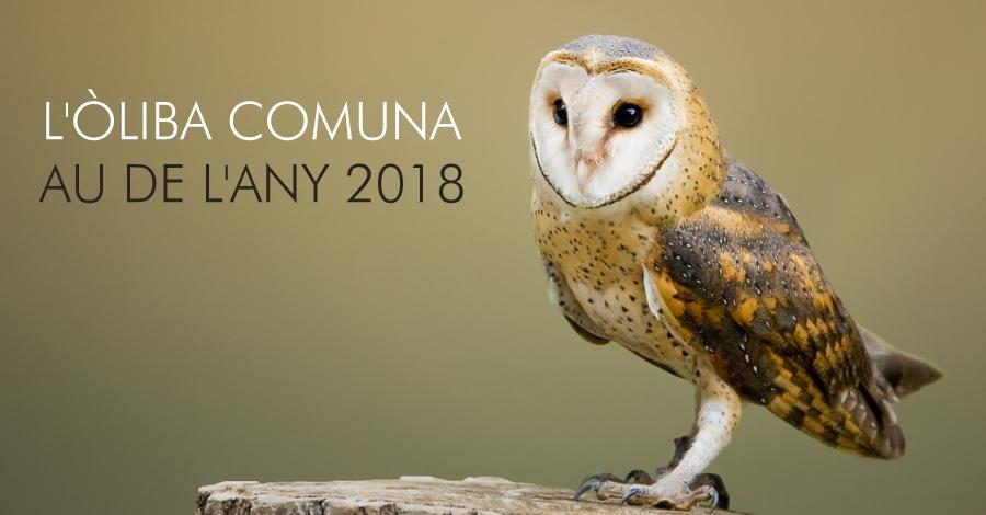 Natura   L'òliba comuna és el Au de l'Any 2018
