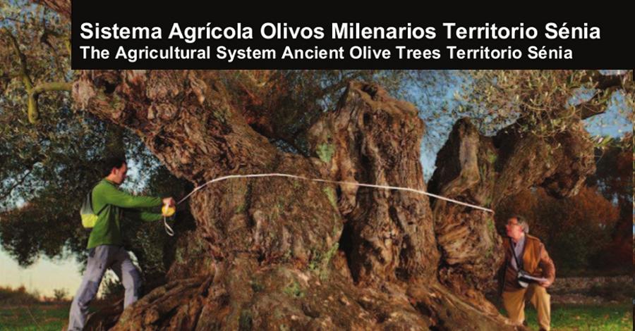 Les oliveres mil·lenàries del territori Sénia, candidates a SIPAM de la FAO