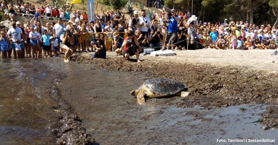 Alliberades a l'Ametlla de Mar cinc tortugues marines recuperades | EbreActiu.cat, revista digital per a la gent activa | Terres de l