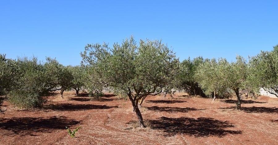 Productors d'oli de la Terra Alta visiten la Toscana