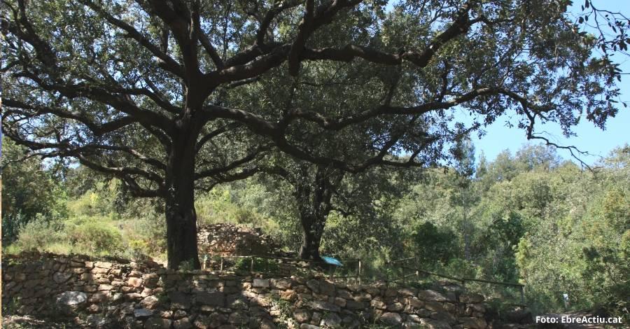 La Ràpita posa en marxa un projecte de conservació al bosc del Burgar | EbreActiu.cat, revista digital per a la gent activa | Terres de l
