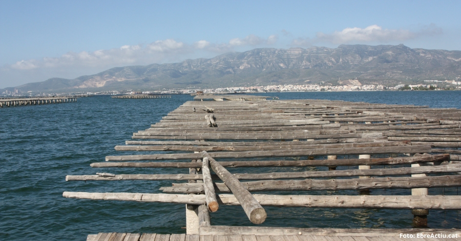 Reactivar l'aportació d'aigua dolça per millorar l'aqüicultura a les badies  dels alfacs i del Fangar