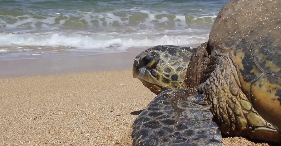 La Xarxa de Rescat de Fauna Marina recull prop de 500 animals entre 2012 i 2016