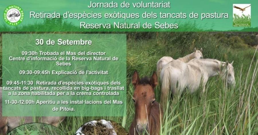 Jornada de voluntariat: Retirada d'espècies exòtiques dels tancats de pastura a la Reserva Natural de Sebes