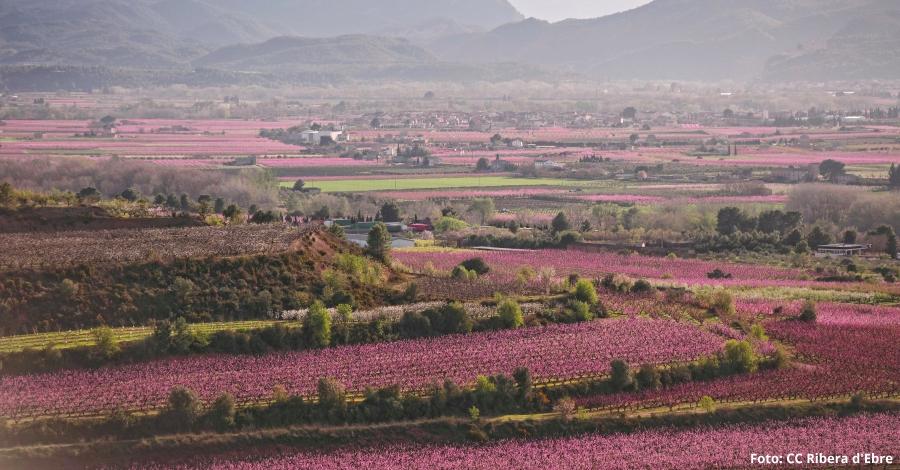 La Ribera en flor obre la temporada turística de la Ribera d'Ebre