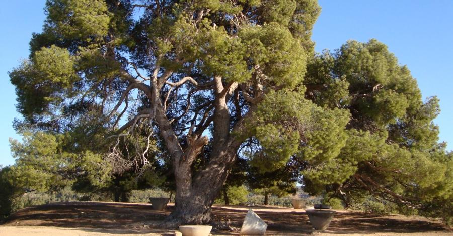 Ruta natura a la Palma d'Ebre