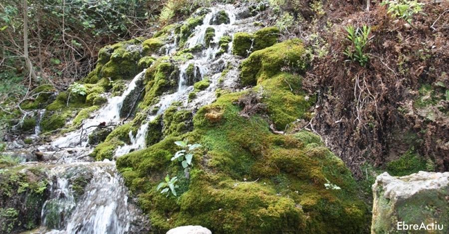 Ruta: El Toscar - Cova Pintada