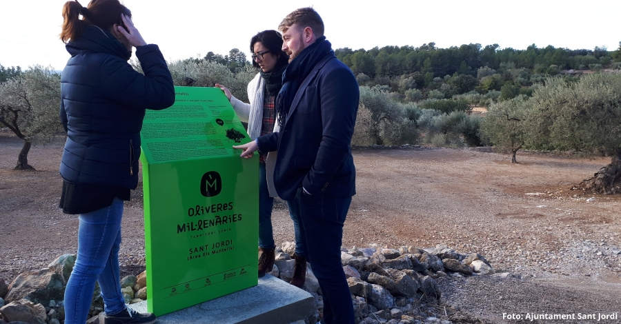 Sant Jordi promociona l'oleoturisme amb la senyalització d'oliveres mil·lenàries