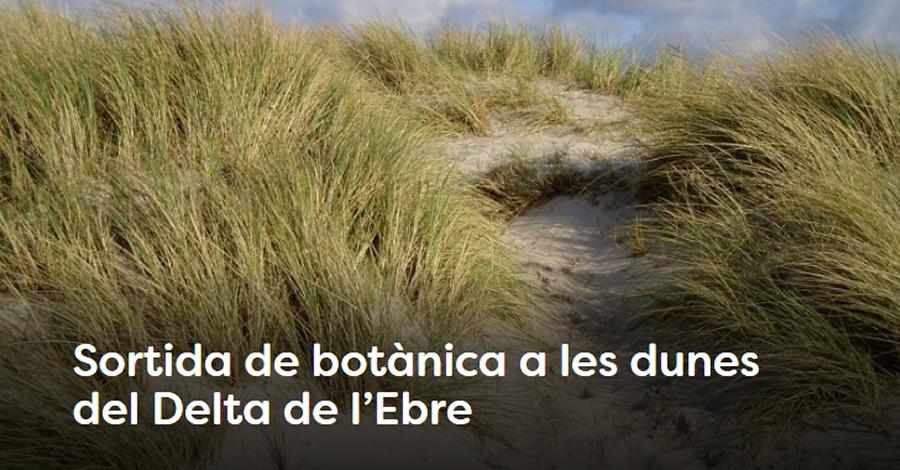 Sortida botànica a les dunes del Delta de l'Ebre