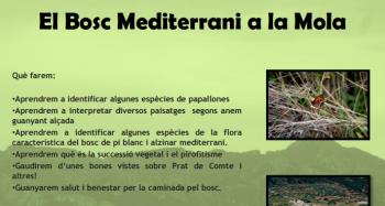 El Bosc Mediterrani a la Mola