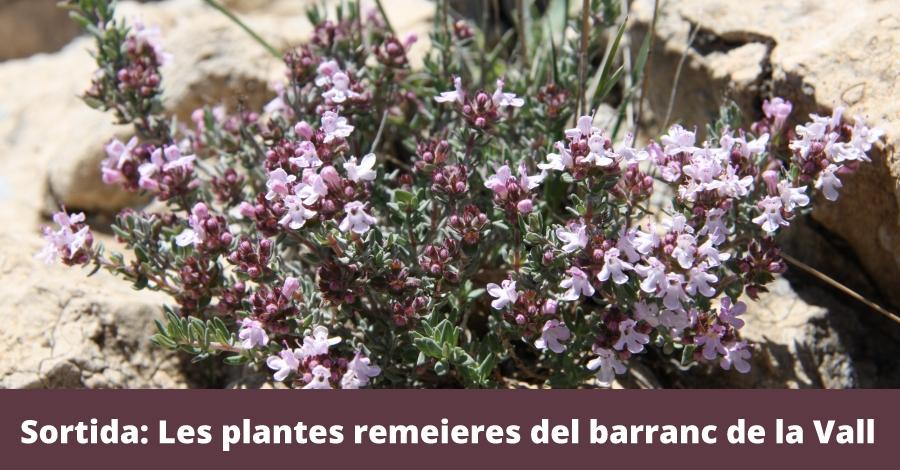 Salida: Las plantas medicinales del barranco de la Vall