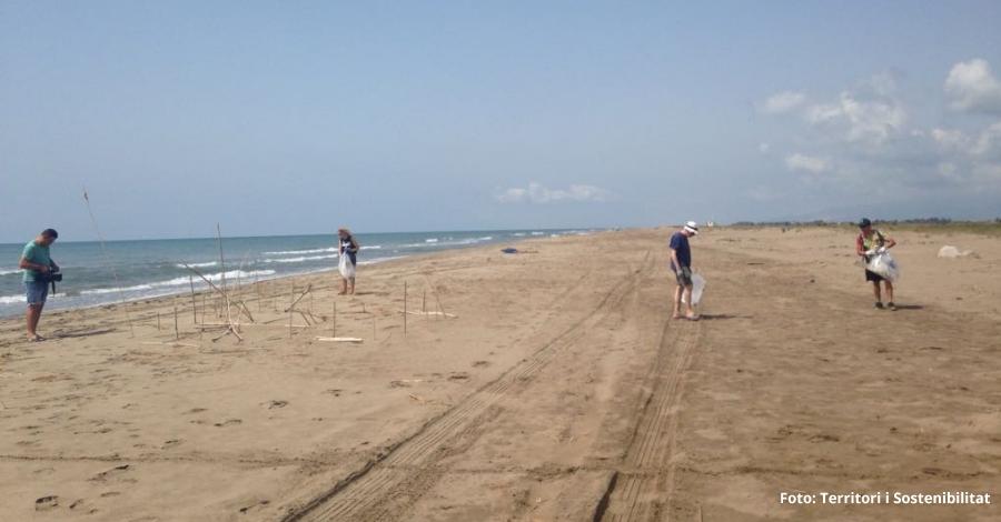 Tècnics del Parc Natural del Delta de l'Ebre recullen 31,3 quilos de brossa marina a la platja del Serrallo