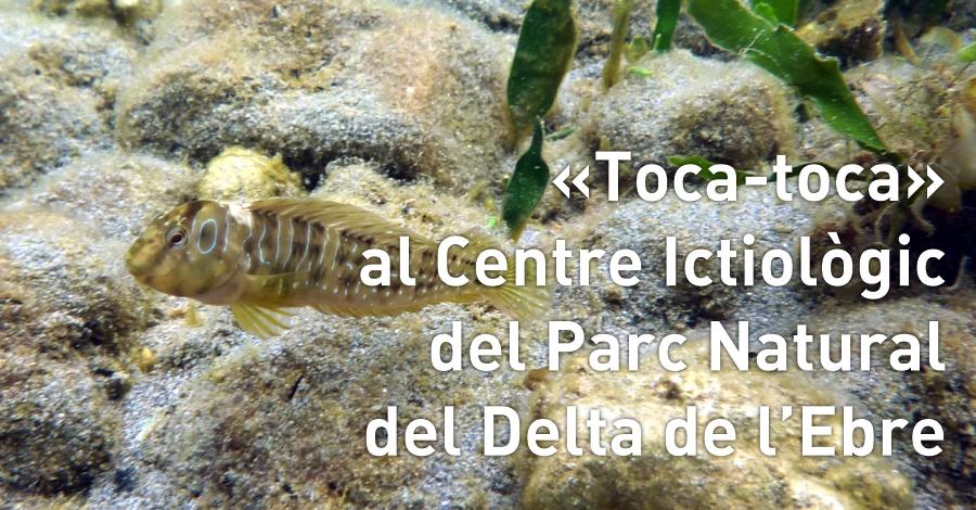 «Toca-toca» al centre Ictiològic del Parc