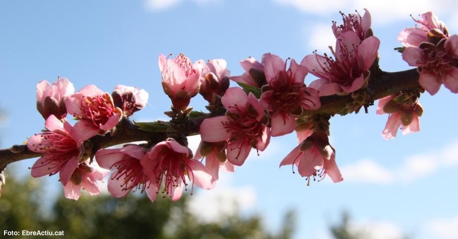 Vinebre enceta la temporada de floració amb una ruta a peu i un tast de vins rosats