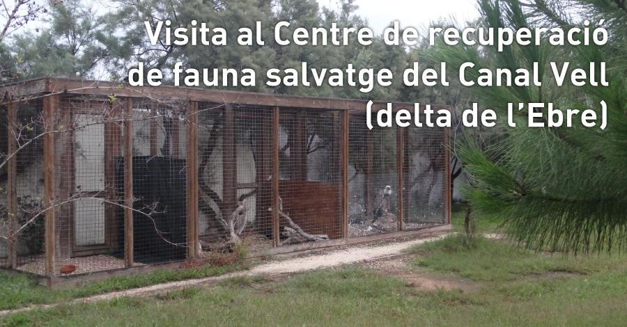 Visita al Centre de recuperació de fauna salvatge del Canal Vell (delta de l'Ebre)