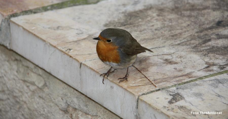 Xerrada: «pardals, muixons i ocells; tot és el mateix»